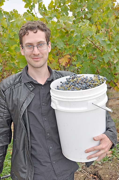 Chris Urquhart Of Ac.care Pitches In For The Grape Pick  TBW Newsgroup