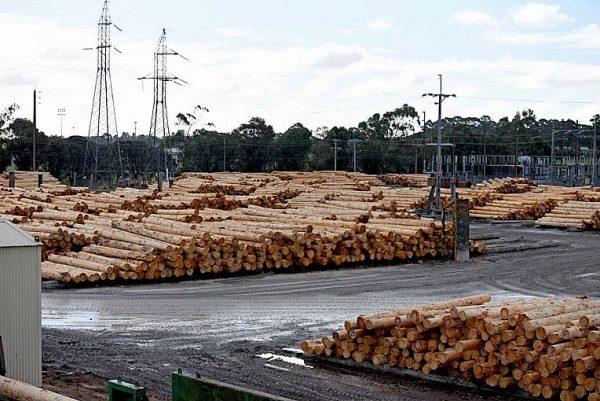 Log Yard Ofo  TBW Newsgroup