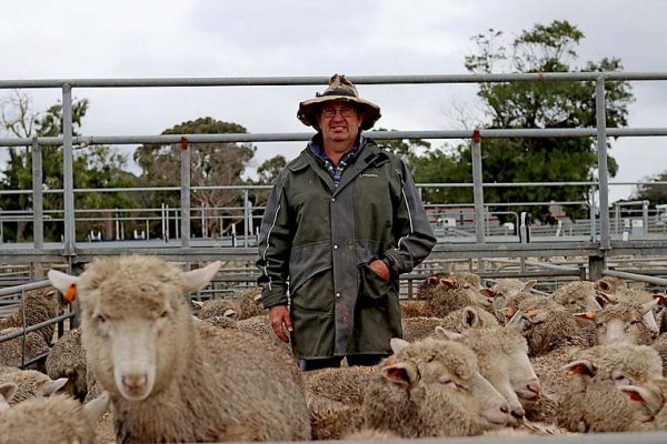 Merv Lock Lamb Producer TBW Newsgroup