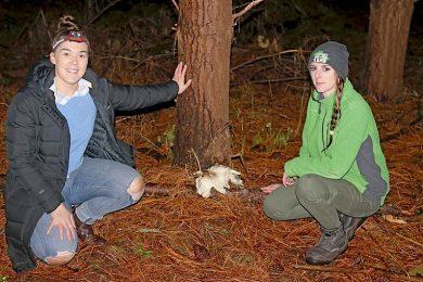 Ghost Mushrooms Molly And Kieran  TBW Newsgroup