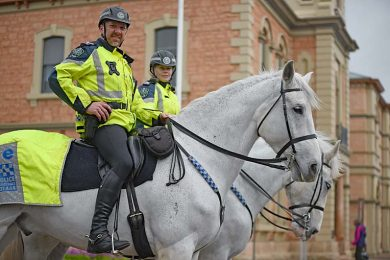 Sa Pol Horses For Facebooke  TBW Newsgroup