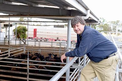 Peter Mitchell Saleyards  TBW Newsgroup