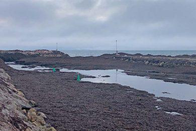 3.maria Creek Sand & Seagrass Accumulation  TBW Newsgroup