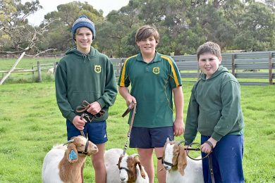 Kias Goats 2  TBW Newsgroup