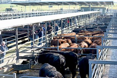 General Saleyards Pic  TBW Newsgroup