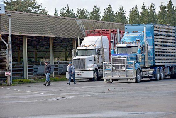 Truck Saleyards TBW Newsgroup