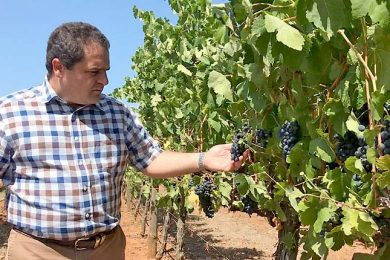 Tony In Coonawarra Vines 2web TBW Newsgroup
