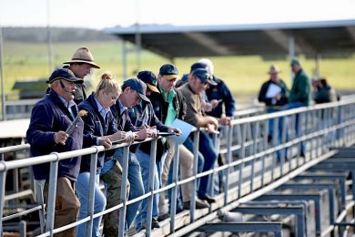 Saleyards Pic  TBW Newsgroup