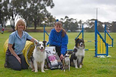 Agility Dogs  TBW Newsgroup