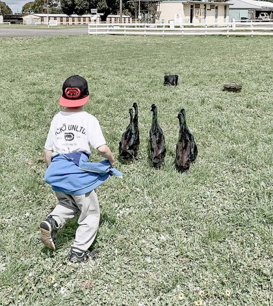 Ducks TBW Newsgroup
