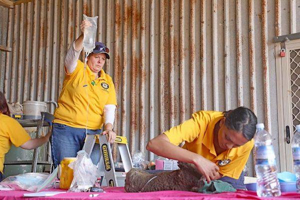 Rspca South Australia Animal Handler Cher Long And Vet Gayle Kothari Kangaroo Island Fires Jan 2020 (4) TBW Newsgroup