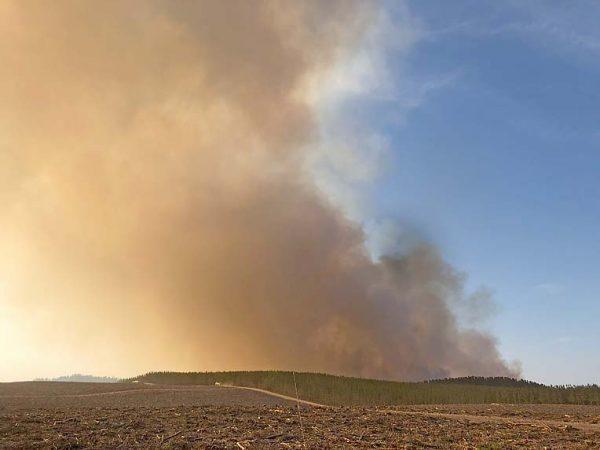 Nelson Fires 2020 Jaiden Bombski Photo (1) TBW Newsgroup