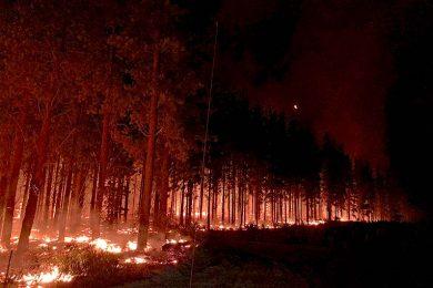 Nelson Fires 2020 Jaiden Bombski Photo (4)  TBW Newsgroup