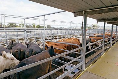 Glen Saleyards  TBW Newsgroup