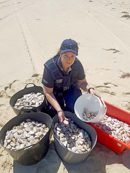 Cockles Poached From Geltwood Beach TBW Newsgroup
