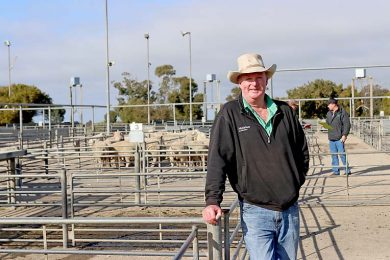 Dale Keatley Saleyards  TBW Newsgroup